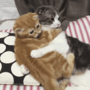 two cats holding each other